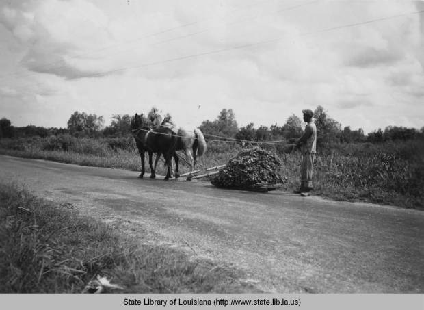 Farmer with horse and goods in Terre-aux-Boeuf, date unknown. Source: Louisiana Digital Library