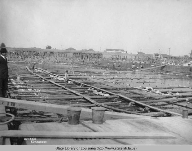 Improving levees in Poydras, 1908. Source: Louisiana Digital Library